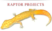 Raptor Projects